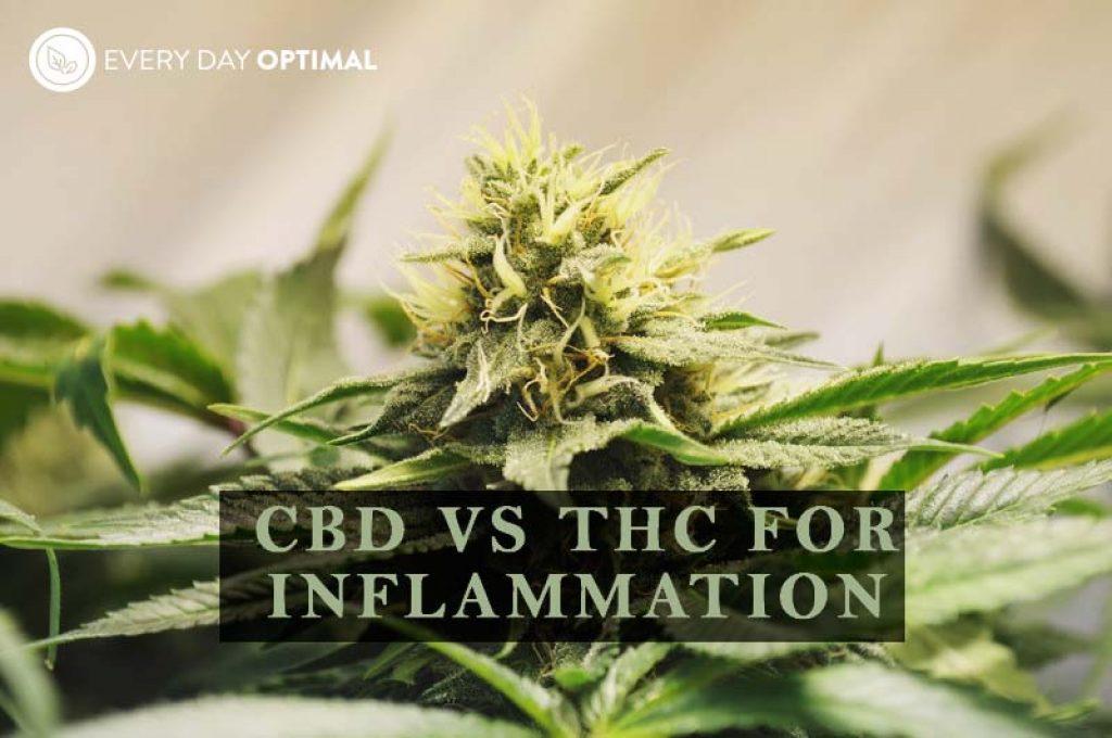 CBD vs THC for Inflammation